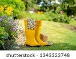 gardening tools in garden | Shutterstock . vector #1343323748
