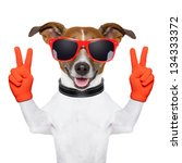 Stock photo peace and victory fingers dog with red gloves and glasses 134333372