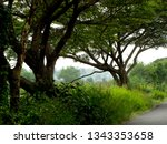 trees on road side from... | Shutterstock . vector #1343353658
