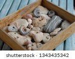 Ancient Small Shells And Yello...