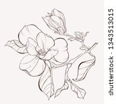 sketch floral botany collection.... | Shutterstock .eps vector #1343513015
