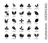 useful leaves silhouette linear ...   Shutterstock .eps vector #1343541362
