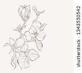 sketch floral botany collection.... | Shutterstock .eps vector #1343550542