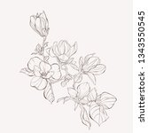 sketch floral botany collection.... | Shutterstock .eps vector #1343550545