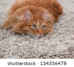 Playful Red Fluffy Cat Lying On ...