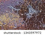 wax moth larvae on an infected...   Shutterstock . vector #1343597972