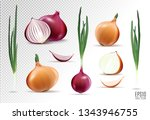 vector collection of onions... | Shutterstock .eps vector #1343946755