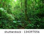 jungle | Shutterstock . vector #134397056
