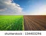 Cultivated Green Meadow. Rural...