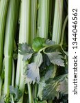 green leeks with leaves in...