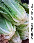 close up of green lettuces in...
