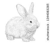 hand drawn vector of rabbit... | Shutterstock .eps vector #1344083285