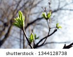 spring orchard tree blooms.... | Shutterstock . vector #1344128738
