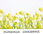 cole flowers background   Shutterstock . vector #1344289955