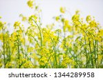 cole flowers background   Shutterstock . vector #1344289958