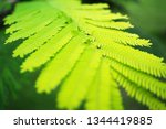 refreshing nature picture used... | Shutterstock . vector #1344419885