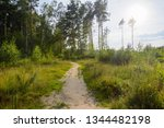 a dirt trail through the... | Shutterstock . vector #1344482198