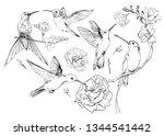 Set Of Hand Drawn Hummingbirds...