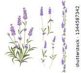provence flowers collection.... | Shutterstock .eps vector #1344587342