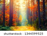 autumn forest. fall background. ... | Shutterstock . vector #1344599525