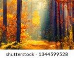 sunlight in forest. path in... | Shutterstock . vector #1344599528