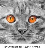 Eyes Ginger Cat Background...