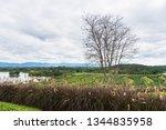 landscape view at tea... | Shutterstock . vector #1344835958