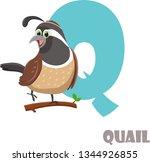 cute animal zoo alphabet.... | Shutterstock .eps vector #1344926855