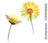 yellow daisy floral botanical... | Shutterstock . vector #1344930602