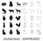 realistic animals black outline ... | Shutterstock .eps vector #1344962825