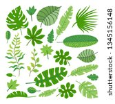 set of tropical leaves. vector... | Shutterstock .eps vector #1345156148