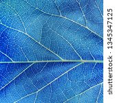 the blue leaf texture background | Shutterstock . vector #1345347125