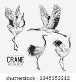 sketch of crane. hand drawn... | Shutterstock .eps vector #1345353212