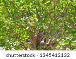 newly hatched baby robins stick ... | Shutterstock . vector #1345412132