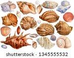 big set of seashells on an...   Shutterstock . vector #1345555532