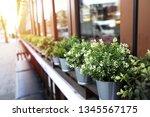 Close Up Zinc Plant Pots With...