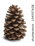 Brown Pine Cone Isolated On...