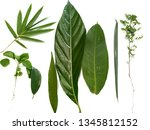 close up green leaves isolated ... | Shutterstock . vector #1345812152