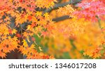 autumn colorful red maple leaf... | Shutterstock . vector #1346017208