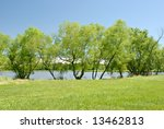 willow trees on the banks of a... | Shutterstock . vector #13462813