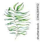 watercolor monstera leaf.... | Shutterstock . vector #1346284952