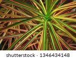 abstract bright background with ...   Shutterstock . vector #1346434148