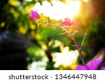 flowers and natural light from... | Shutterstock . vector #1346447948