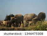 the family of buffalo | Shutterstock . vector #1346475308