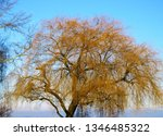 close up of weeping willow tree ... | Shutterstock . vector #1346485322