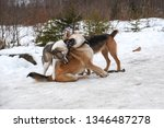 big dogs playing in the snow... | Shutterstock . vector #1346487278