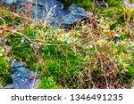 green mosses  light grass ... | Shutterstock . vector #1346491235