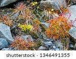 green mosses  light grass ... | Shutterstock . vector #1346491355