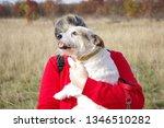 family tour. dog walking | Shutterstock . vector #1346510282