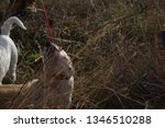 family tour. dog walking | Shutterstock . vector #1346510288